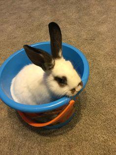 My sisters bunny Shallow Turbo