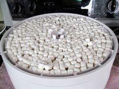 Dehydrated Marshmallows