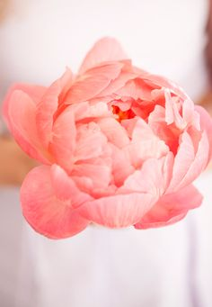 Peony season needs to arrive now. I can't wait much longer. (photo by Nicole Hill Gerulat)