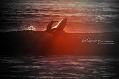 "https://flic.kr/p/X98AyZ | ""sunset surfer"" 