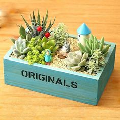 Succulent Gardening, Succulents Garden, Cactus Y Suculentas, Plant Shelves, Garden Crafts, Garden Design, Home And Garden, Miniatures, Flowers