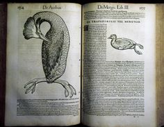 """#GESSNER (Conrad) Historiae animalium. Liber III - anno MDLIIII (1554) Collezione privata """"Frilli"""" Forte dei Marmi. Prima edizione. Svasso #frillilibrary"""