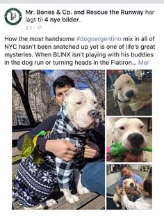 3/2/17 NYC ACC SURVIVOR BLINX UPDATE❤️ HE'S AVAILABLE !!! /ij https://m.facebook.com/story.php?story_fbid=782072791942311&id=169388193210777&__tn__=%2As