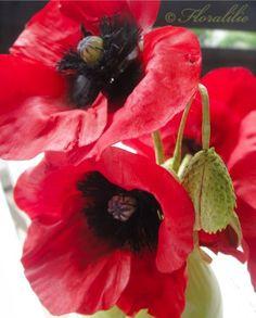Klatschmohn aus Zucker von Floralilie