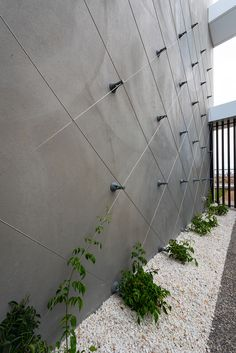 Synonymous with quality, the Ronstan ™ Easy Green tensioned wire trellis system is designed to easily be installed. Vertical Garden Systems, Vertical Garden Wall, Vertical Gardens, Wire Trellis, Garden Trellis, Green Facade, Walled Garden, Small Garden Design, Backyard Landscaping