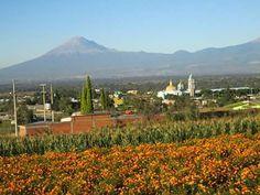 Cultivo de Cempoazuchitl o flor de muerto en San Juan Huautzingo Tlaxcala foto de Abel Mena Perez