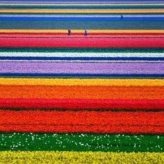 colour stripes.