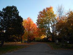 A walk in the neighbourhood - Ottawa, Ontario, Canada - Autumn rocks!