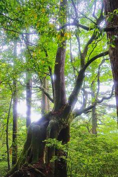 rain celebration - sunshine and rain drops in yakushima