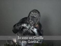 Koko è una femmina di gorilla, una delle poche specie in grado di comunicare con l'uomo usando il linguaggio dei segni. L'organizzazione non governativa NOE Conservation l'ha invitata a rappresentare la Voce della Natura alla COP21, la Conferenza sul Clima delle Nazioni Unite che si è tenuta a Parigi lo scorso dicembre. Koko si presenta: «Io sono un gorilla. Sono fiori, sono animali, sono Natura. Koko ama l'uomo e ama la Terra. Ma l'uomo è stupido e Koko è triste e piange. Il tempo stringe…