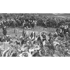 """10/03/1914SERVICIOS DE LA POLICÍA INDÍGENA EN EL RIF. FUERZAS DE LA QUINTA """"MIA"""" PREPARANDO UNA EMBOSCADA A LOS BANDOLEROS (RATAS DE CAMPO COMO ELLOS LOS LLAMAN): Descarga y compra fotografías históricas en   abcfoto.abc.es"""