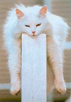 """""""If a cat spoke, it would say things like, 'Hey, I don't see the problem here.'"""" --Roy Blount, Jr"""
