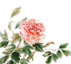 pivoine-chinoise-dessin