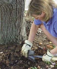 Planting under a Tree - Fine Gardening Article great tips as I definitely deal with some pathetic soil in my one under tree garden. Plants Under Trees, Trees And Shrubs, Trees To Plant, Evergreen Trees, Garden Trees, Lawn And Garden, Garden Plants, Fruit Garden, Garden Bed