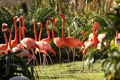 Explore a one-of-a-kind botanical show and marvel at the wildlife, exotic birds and the reptiles. Jungle Island is an entertaining and fun adventure for everyone!  http://biginexcursions.com