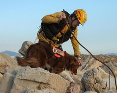 """""""Shelter Me,"""" premiering on PBS tonight, features former pound pups that are now saving lives as search-and-rescue dogs. Search And Rescue Dogs, Shelter Me, Military Working Dogs, Survival Life, Survival Skills, Dogs Of The World, Service Dogs, Mans Best Friend, Dog Life"""