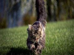 Un gato corriendo veloz sobre la hierba