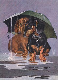 Dachshund Charming Dog Greetings Note Card Two Dogs Sit Under Umbrella In Rain Basset Dachshund, Vintage Dachshund, Dachshund Art, Daschund, I Love Dogs, Cute Dogs, Weenie Dogs, Doggies, Shelter Dogs