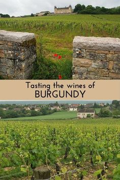 Read about tasting the wines of Burgundy: