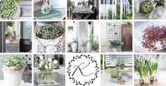 Kukkala on blogi, jossa intoillaan, innostutaan, hehkutetaan ja fiilistellään kukkia ja kasveja sisustamisessa; talvella enemmän sisällä ja...
