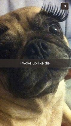I woke up like dis - 26 Snapchats From Your Dog - hilarious!