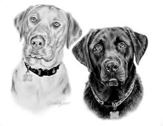 Dog Art, Horse Art & Other Pet Portraits Sketched By Hand in Graphite Pencil Done Working From Your Photos by Pet Artist Genevieve Schlueter. Pencil Sketch Drawing, Dog Portraits, Horse Art, Dog Art, Dog Breeds, Your Dog, Labrador Retriever, How To Draw Hands, Dog Drawings