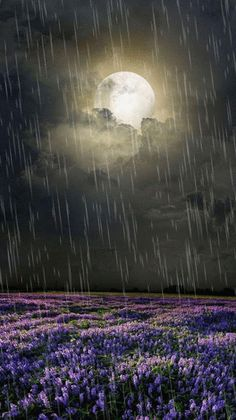 Rain will help the bluebells grow Night Rain, Rainy Night, Rain Days, Nature Gif, Nature Images, Nature Pictures, Beautiful Scenery Pictures, Beautiful Gif, Rain Photography
