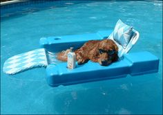 Dog Days of Summer : )
