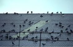 http://www.pestsolutions.co.uk/  Get instant solutions from birds in your premises . visit the above link for pest solutions #PestSolution