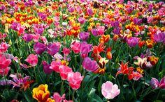 Uma das partes mais gostosas do casamento é decidir a paleta de cores, as flores e tudo que vai dar graça á decoração. Este é o momento principal para colocar a personalidade de vocês no casamento.…