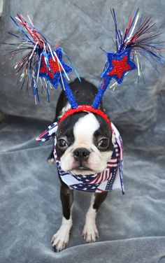 """I love 4th of July because...."" Patriotic Boston Terrier #SwimSpot #swimsuit www.SwimSpot.com"