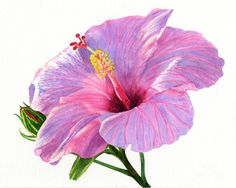 Pink Hibiscus Blossom With Blue Shadows Painting by Sharon Freeman