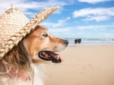The Best Dog Summer Clothes Kill Fleas On Dogs, Home Remedies For Fleas, Best Dog Food Brands, Dog Died, Summer Outfits, Summer Clothes, Oils For Dogs, Summer Dog, Dog Bows