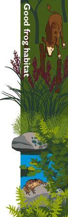 How to create your own frog habitat Frog Habitat, Allotment Ideas, Habitats, Create Your Own, Environment, Garden, Painting, Animals, Art