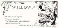 From 'Tree Fairies' illustrated by Franke Rogers Ruled by the Moon, its . From 'Tree F Willow Tree Meaning, Tree Tattoo Meaning, Tattoo Tree, Tree Information, Willow Tree Tattoos, Tree Id, Tree Quotes, Weeping Willow, Celtic Tree