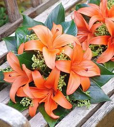Fully wired posy shaped bouquet of orange asiatic lilies with green berries and anthirum leaves.