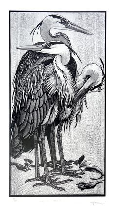 Siege of Herons ~ Wood Engraving ~ Colin See-Paynton ~ The Wildlife Art Gallery Más Encaustic Painting, Painting & Drawing, Davidson Galleries, Historia Natural, Scratchboard, Monochrom, Wood Engraving, Art Prints, Lino Prints