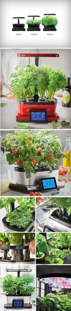 The AeroGarden Harvest Touch set out to make sure big city living, with all of the hustle and bustle, doesn't mean neglecting the importance of a balanced diet. The overall design for the indoor garden is warm and approachable. AeroGarden's Harvest Touch was designed to integrate seamlessly into a city dwelling environment, allowing anyone to grow their very own vegetables at home. BUY NOW!