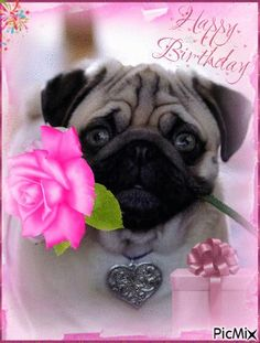 Happy Birthday Dog Gif, Birthday Greetings For Sister, Happy Birthday Wishes Cards, Happy Birthday Images, Dog Birthday, Birthday Quotes, Birthday Cards, Birthday Gifs, Animal Birthday
