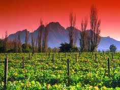 Here are a few reasons why you should visit the enchanting wine region of the Western Cape. #Winelands  http://www.capeletting.com/why-should-you-visit-the-cape-winelands/