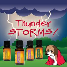 Thunderstorms can be scary! Apply a dab of Lavender essential oils on your hands and transfer to the collar and ear area. Effective for cats, too. Other options include the 'calming blend,' Vetiver or the 'grounding blend.'