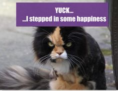Unexpectedly happy things that have happened. Gross things that have happened to me. Training a cat - imagine trying to make a good citizen out of Grumpy Cat. Good Citizen, Happy Things, Grumpy Cat, Training, Shit Happens, Cats, Fun, Animals, Gatos