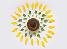 Nunca foi tão fácil brincar de bem me quer, mal me quer: Exploded Flowers é a série de fotos do artista Fong Qi Wei, que mostra uma variedade de flores tran