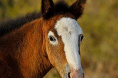 The Choctaw Filly…    She's a rare breed of horse…bred by the Native American Choctaw Indians…the Choctaw horse originates in the state of Mississippi…they are smart…very strong and extremely agile
