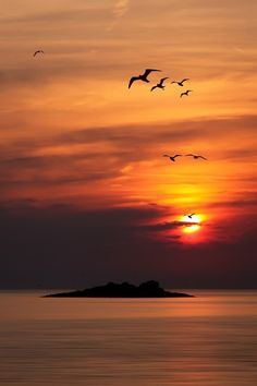 Beautiful sunset with ducks coming in to land for the night. Beautiful colors of sky, clouds and water. Love this scene!!