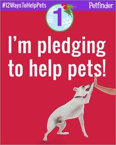 12 Ways To Help Pets!!!
