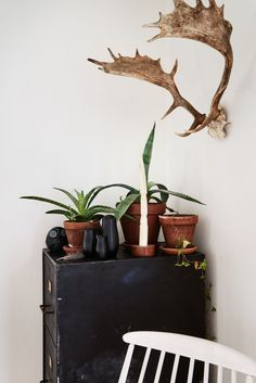 decorative deer antlers for wall
