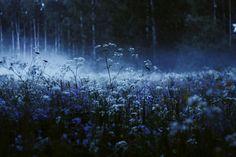 Nature Aesthetic, Blue Aesthetic, Yennefer Of Vengerberg, Ravenclaw, Belle Photo, Twilight, Mists, Nature Photography, Photography Tips