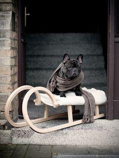 Smile:-) French Bulldog ❤