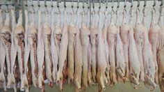 #ALERTA  #Escandalo en #Brasil expenden #Carnet PODRIDA maquillada con #Productos #Cancerigenos  Cerdos en frigorífero